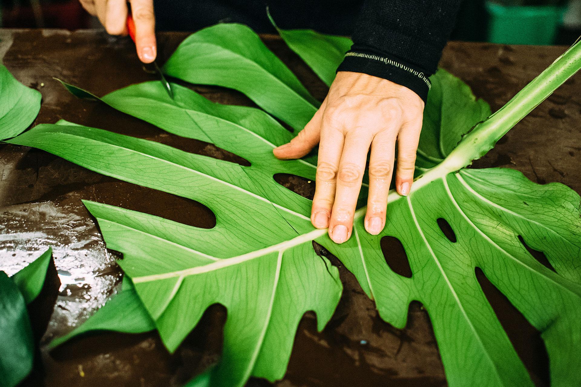 Mietpflanzen und Blumensträuße für eine stilvolle Messedekoration