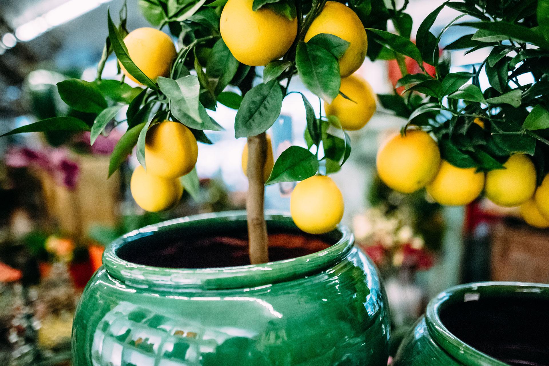 Pflegeleichte Zimmerpflanzen als ideale Innenraumbegrünung