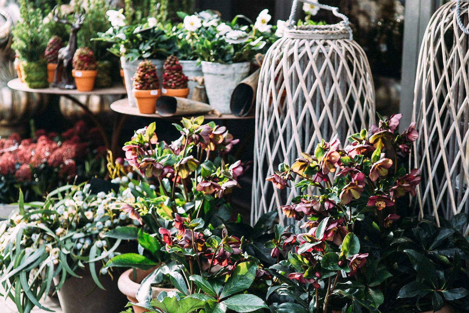 Vielseitige terrassenbepflanzung und balkonpflanzen for Pflegeleichte balkonpflanzen