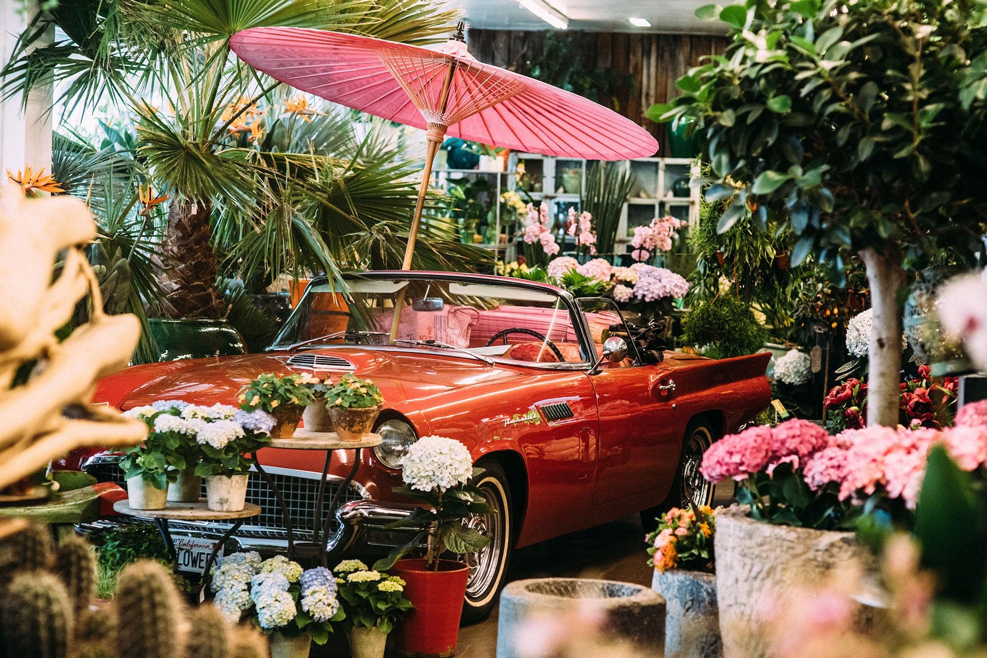 Auto zwischen Pflanzen