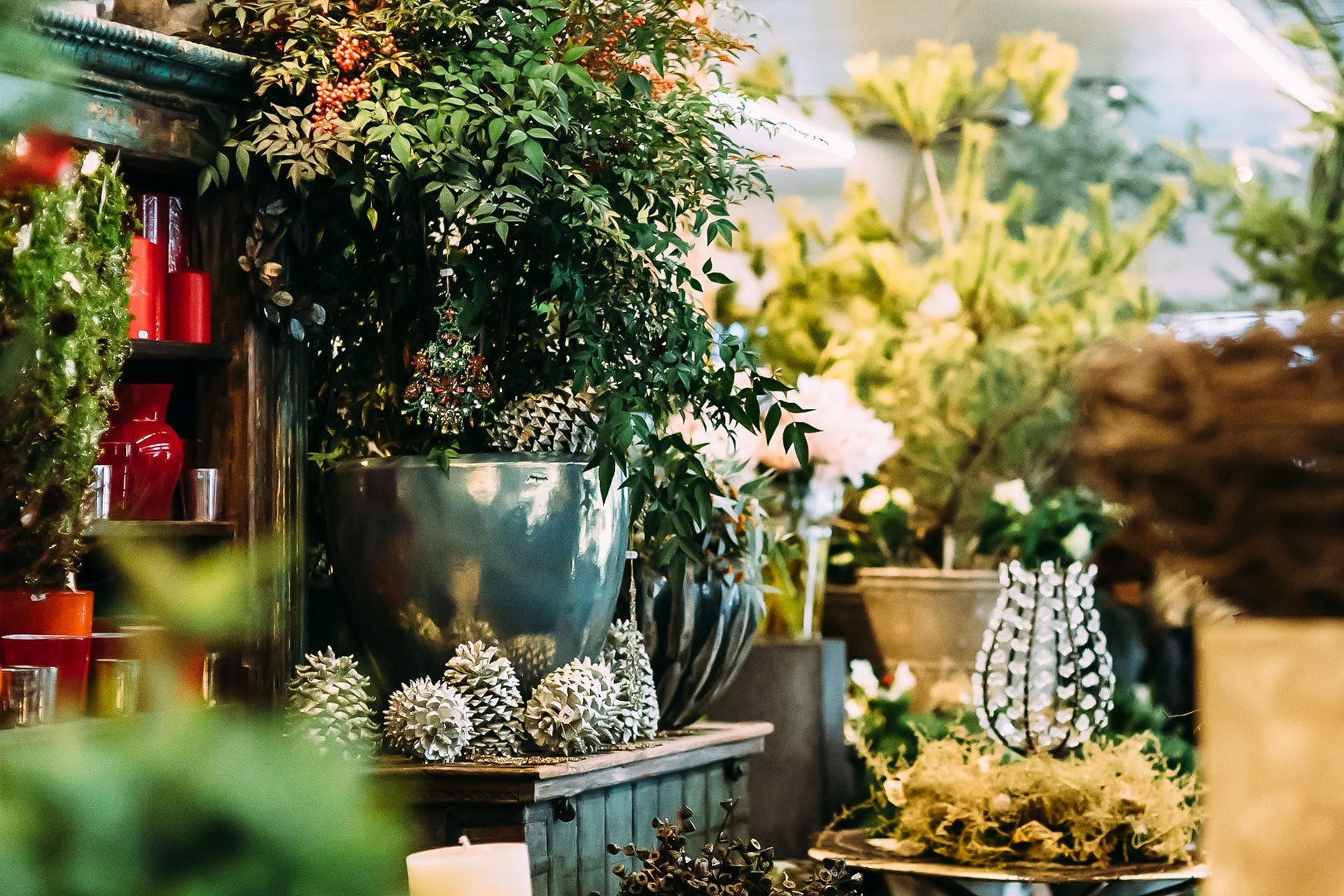 Weihnachtliche Dekorationen und Pflanzen