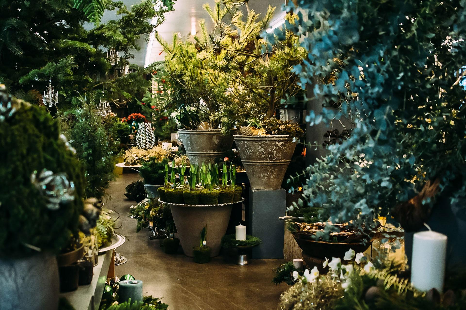 Terrassenbepflanzung – Pflanzen und Blumen