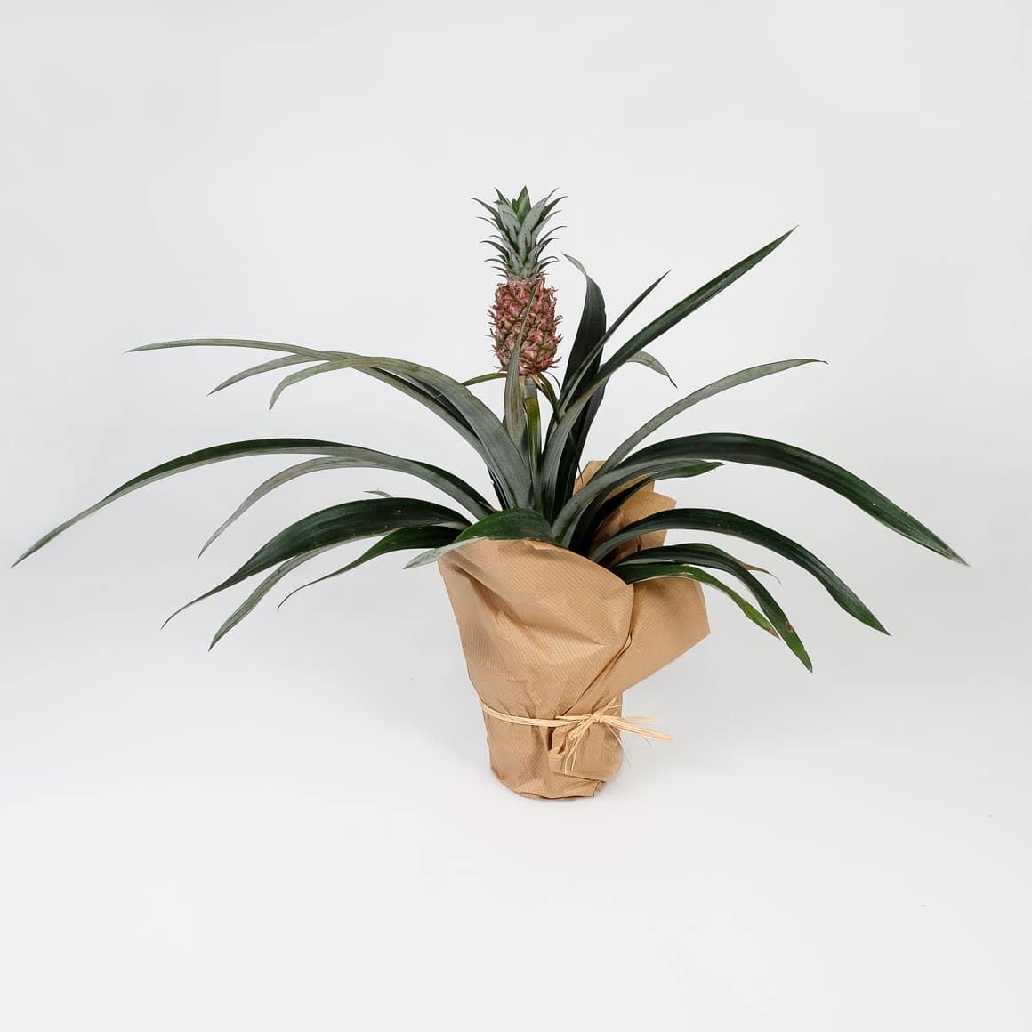 Ananas Prinzessin