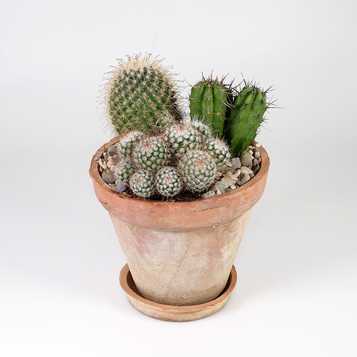Kaktus-Topf