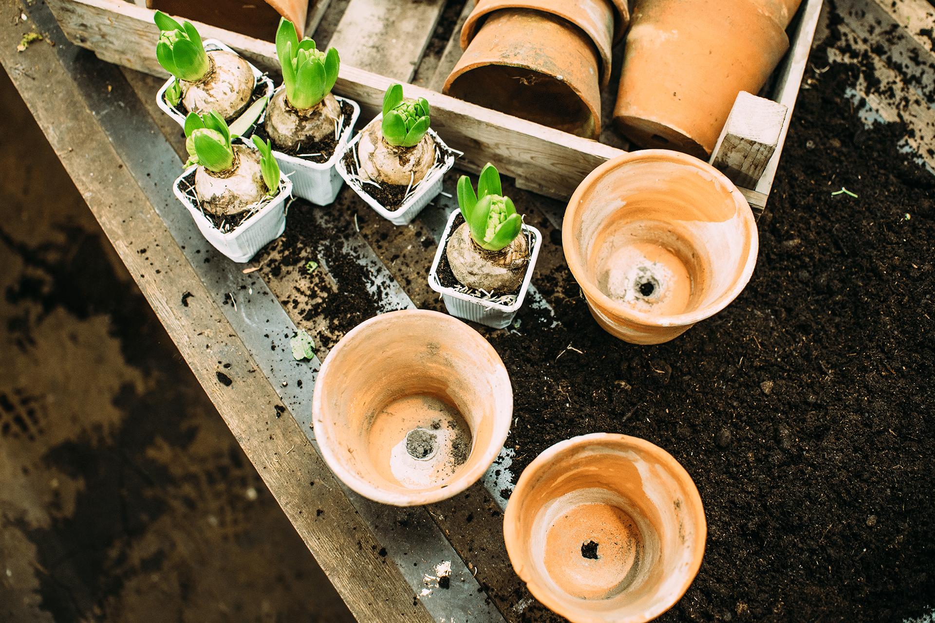 Vintage Blumen- und Pflanzengefäße